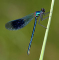 Male, Westbere Lakes, May, 2015