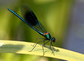 Male, Westbere Lakes, June, 2013