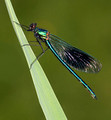 Male, Westbere Lakes, May 2016