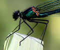 Male, Westbere Lakes, May 2014